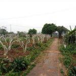 Thực trạng sản xuất nông nghiệp và giải pháp ứng dụng công nghệ tưới tiết kiệm nước cho vùng bãi sông Thành phố Hà Nội