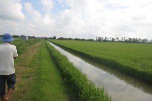 Giải pháp thúc đẩy liên kết sản xuất, tiêu thụ sản phẩm vùng chuyển đổi sản xuất lúa-tôm ven biển Tây, đồng bằng sông Cửu Long